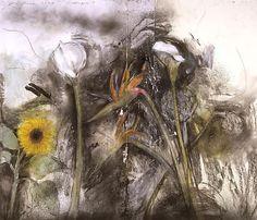 jim dine | Jim Dine - flowers - Pictify - your social art network