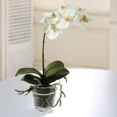 Jane Seymour Phalaenopsis Orchid 12 in. White Silk Flower Arrangement - P4055-WH