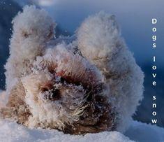 Wuffclickpic Winter Notes von Petra Saf Photography | Blurb-Bücher Deutschland