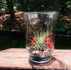 DIY Glass Air Plant Terrarium Large Fluted Vase