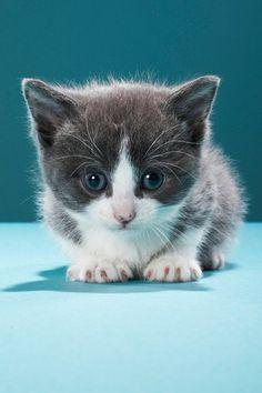 Cute baby animals. Looks like my cat fairy                                                        - Sarah