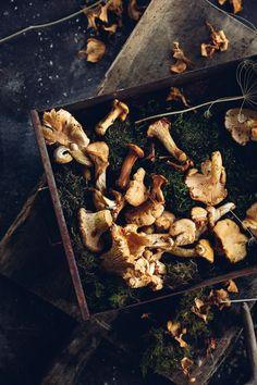 Wild Mushroom Fondue - Christiann Koepke