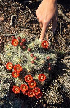 Desert Blooms — A Wilder World