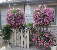 80 best hanging baskets images on pinterest flowers garden pink hanging baskets mightylinksfo