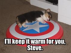 "I bet Steve wouldn't even touch it and him and Thor would be all ""awwwww SOOO cute!"" And Loki would come and do something evil. My to favorite this together. Dogs, and marvel. Funny Animals, Cute Animals, Baby Animals, Dc Anime, I Am Batman, Fauna, The Villain, Marvel Movies, Marvel Cinematic Universe"