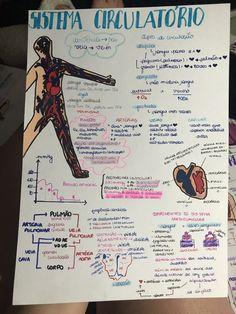 Resumo de Biologia : Sistema Circulatório