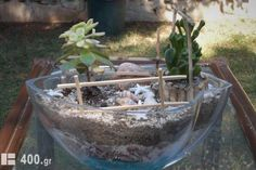 Κήποι Μινιατούρες Terrarium, Greece, Plants, Google, Decor, Terrariums, Greece Country, Decoration, Plant