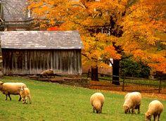 Pennsylvania fall Foliage | Fall is bigger in Pennsylvania. A trillion trees are waiting to amaze ...