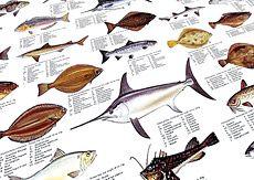 North American Fish