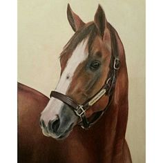 """""""California Chrome"""" is a portrait of the winner of the 2014 Kentucky Derby and Preakness Stakes and the 2014 American Horse of the Year…"""