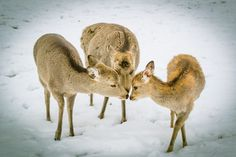 Do you not cold? by Ryusuke Komori on 500px