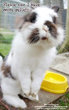 Rabbit care-10 common mistakes http://best4bunny.com/wp/caring-rabbits-10-things-wrong/