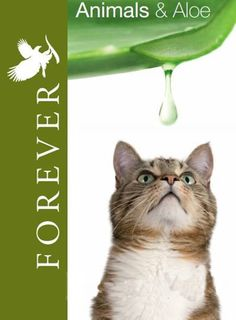 AloeVera Gel Drink is great for a cats all over health. Take care off your adorable cats they deserve it.