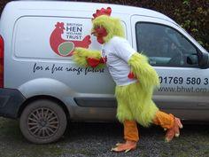 #BHWT #ChickenRuns