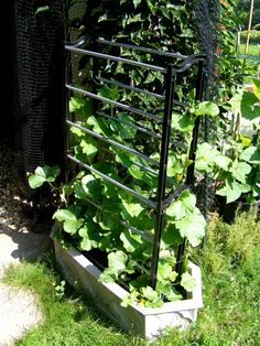 Growing melons in a small space. 1) Have a small space 2) Plant your melons 3) Add a shoe rack - it'll support the growing fruits 4) That is all ;)