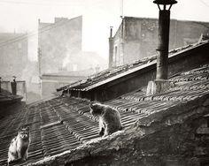 Édouard Boubat - Cats on a roof in Paris. 1947.