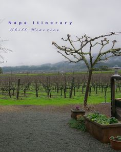 Napa Itinerary: Chill AF Wineries. No snobbiness.
