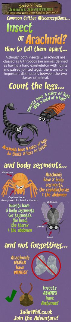 Why are invertebrates important?
