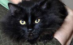 Billy, un chat très chanceux -  Billy est resté plus de 50 heures dans un appartement enfumé de l'immeuble qui avait pris feu ... lire la suite sur notre site web