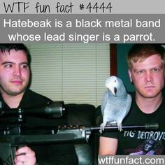 Hatebeak is a black metal band with a parrot as lead singer - WTF fun facts