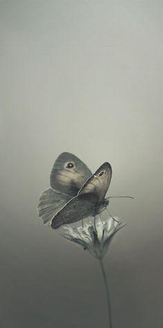 **Grey  /    Beautiful.