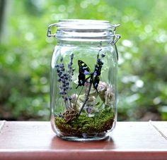 Beautiful and interesting for the kids.    Gift for Her Butterfly Terrarium Kit in by TheAmateurNaturalist, $42.00
