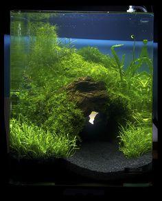 135 best aquascaping images aquarium ideas planted aquarium rh pinterest com