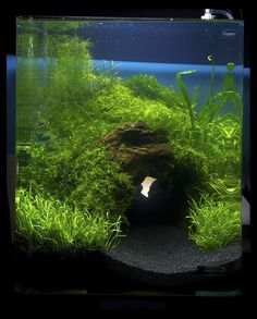 "2011 Germany ""planted tank of art,"" Aquatic Plants Layout Contest results - Marsh House of cylinders. I really want to try this when I rescape my 90 litre - I have some curved Malaysian driftwood that might just do the job."