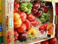 À Table: Tomates Farcies et Romarin Frit