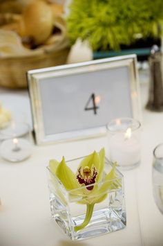 The cocktail tables will have floating green cymbidium orchid in small square vases. Glass Rocks, School Reunion, Cymbidium Orchids, Wedding Inspiration, Wedding Ideas, Ms Gs, Cocktail Tables, Spring Wedding, Charleston
