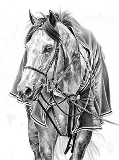 Great drawing of horse with blanket
