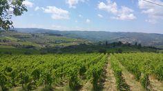 #tuscany #Chianti #panzano #wineyards