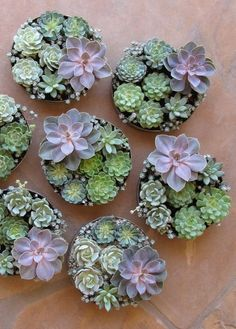 How to Propagate Succulents. See how to take advantage of more gorgeous succulents in your home with these easy tips for propagating. http://stagetecture.com/2014/06/summer-gardening-propagate-succulents/