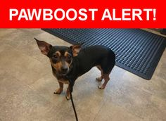Is this your lost pet? Found in Long Beach, CA 90804. Please spread the word so we can find the owner!  Found a lost looking black and tan dachshund/chihuahua mix at St Louis and 14th around 2 pm on June 6th. She's microchipped, but it's not registered.   Near Saint Louis Ave & E 14th St