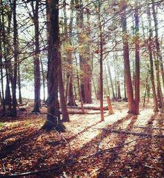 """New England Escape,"" by Sierra Metviner taken at Brookfield, CT"