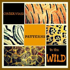 Image result for paws claws and whiskers art