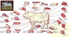 Druhy steaků a jak se kde porcuje hovězí (beef cuts) :: Beefsteak Things To Do With Boys, Animal Science, Food Charts, Butcher Shop, Plate Art, Beef Steak, Mini Foods, Meat Recipes, Yummy Recipes