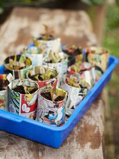 Tray of newspaper Pots Ready to Plant in Ground