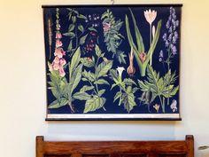 Vintage Botanical Wall Chart