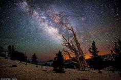 A destacar: el señor Negro espera viajar internacionalmente junto a fotografiar las estrellas.  En la foto: Ancient Bristlecone Pine Forest, California.