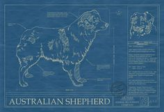 Australian Shepherd Blueprint