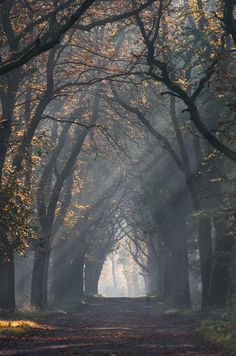 Fine Art Forest Photography by Katarzyna Pustiowska #photography #forest #fineart #landscaping