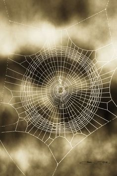 Reminds me of a dreamcatcher Spider Art, Spider Webs, Macro Photography, Levitation Photography, Winter Photography, Abstract Photography, Patterns In Nature, Fauna, Amazing Spider
