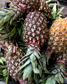 . . #fresh #pineapple #fruit #organic #exotic #africa #vegetarian #healthyfood #healthy #snack #fitfood #thefeedfeed #fitfam #greens #feedfeed #eatclean #cleaneating #eatwell #garden #gardening #photography #foodgasm #colors #igers #sustainability #nutrition #instafood #igfood #foodie #market