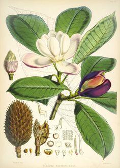 Ботаническая иллюстрация | 2 400 фотографий