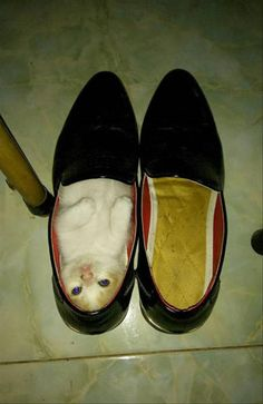 """""""If the shoe fits..."""""""