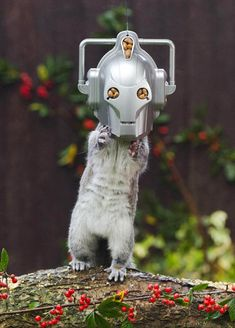 A huge Doctor Who fan Emma Young created a funny squirrel feeder that turns cute visitors of her garden into the Time Lord's nemesis, the Cyberman. She made the feeder from an old shower radio, with tasty nuts stuck in the back. Emma patiently waited for squirrels to come and then snapped some hilarious photos.