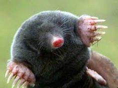 Google Image Result for http://eofdreams.com/data_images/dreams/mole/mole-02.jpg