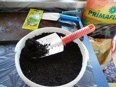 Bazalka - pestovanie a použitie v kuchyni (fotopostup) - obrázok 4 Gardening, Lawn And Garden, Horticulture