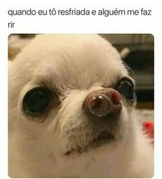 Pictures - chihuahua meme: 5 thousand images found in Yandex.Pictures chihuahua meme: 5 thousand images found - Cute Animal Memes, Animal Jokes, Cute Funny Animals, Funny Cute, Cute Cats, Chihuahua Meme, Funny Chihuahua Pictures, Funny Animal Pictures, Meme Pictures